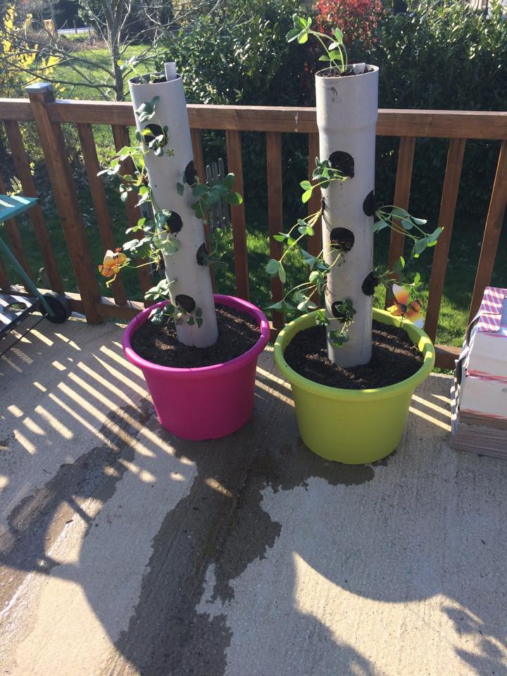 planter des fraises planter des fraises en ville youtube comment planter des fraisiers en pot. Black Bedroom Furniture Sets. Home Design Ideas